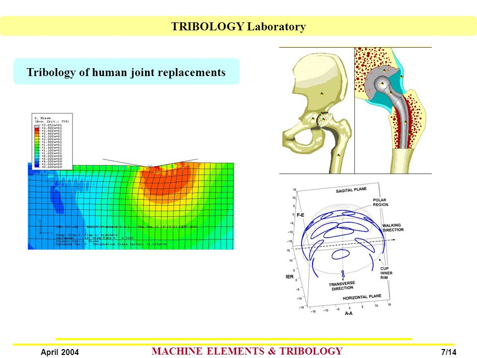 7/14 April 2004 MACHINE ELEMENTS & TRIBOLOGY Tribology of human joint replacements TRIBOLOGY Laboratory