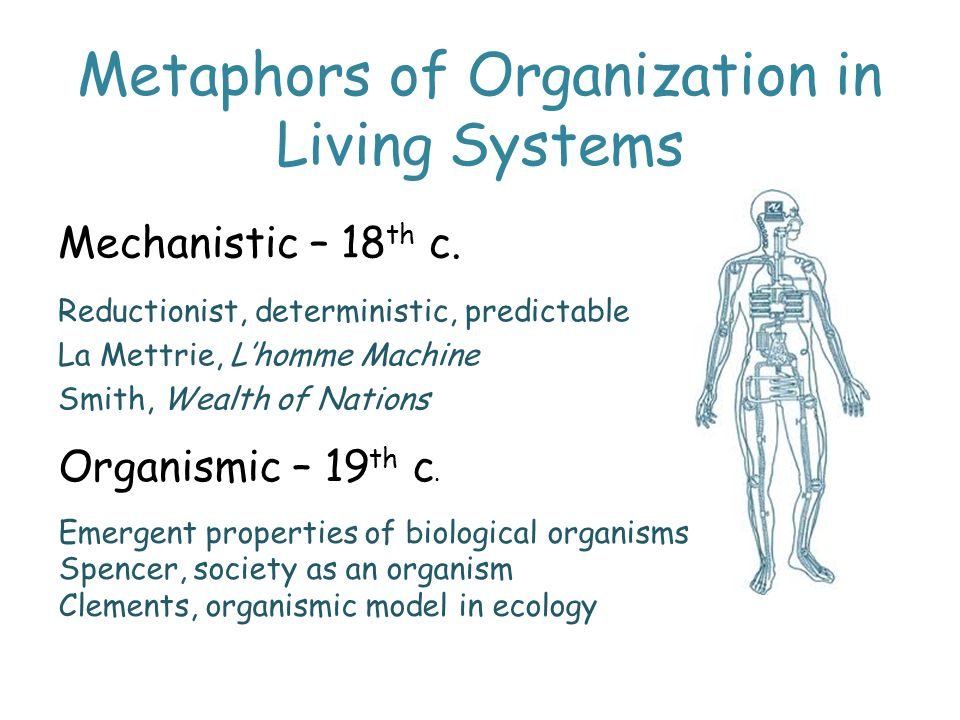 Metaphors of Organization in Living Systems Mechanistic – 18 th c.