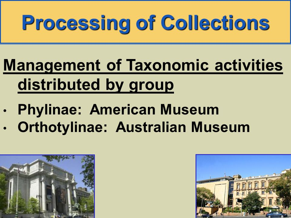 Processing of Collections Management of Taxonomic activities distributed by group Phylinae: American Museum Orthotylinae: Australian Museum
