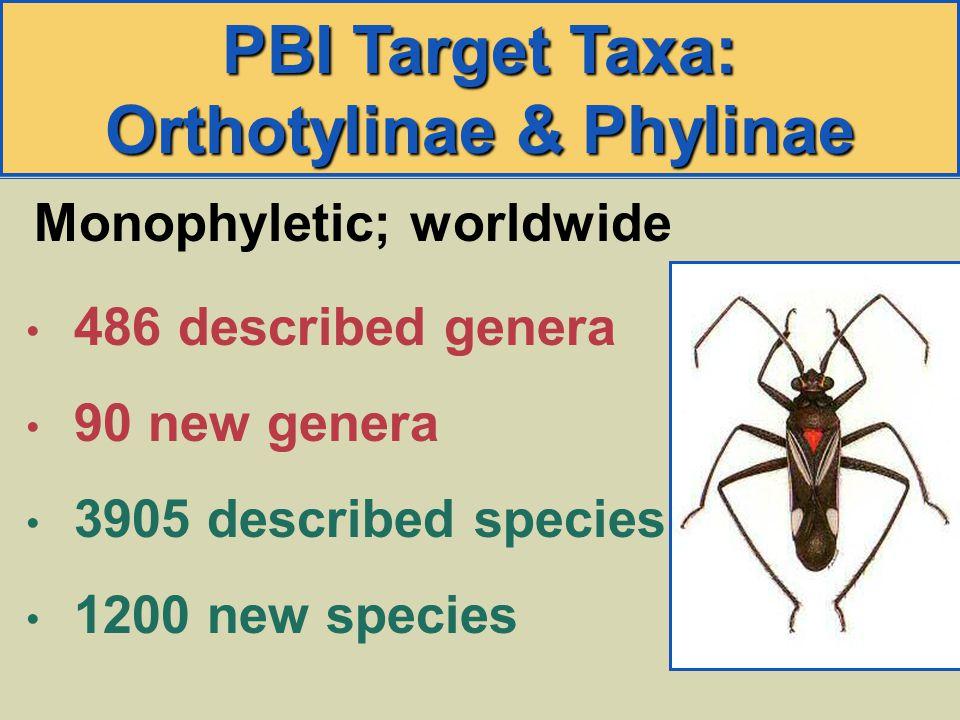 PBI Target Taxa: Orthotylinae & Phylinae 486 described genera 90 new genera 3905 described species 1200 new species Monophyletic; worldwide