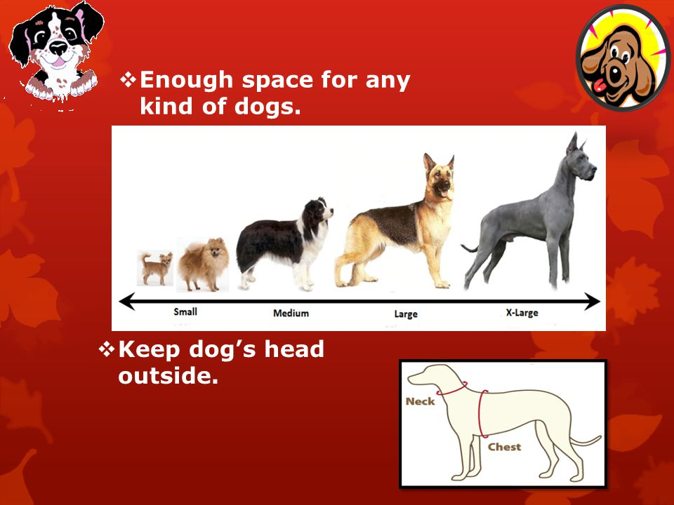 Enough space for any kind of dogs. Keep dogs head outside.