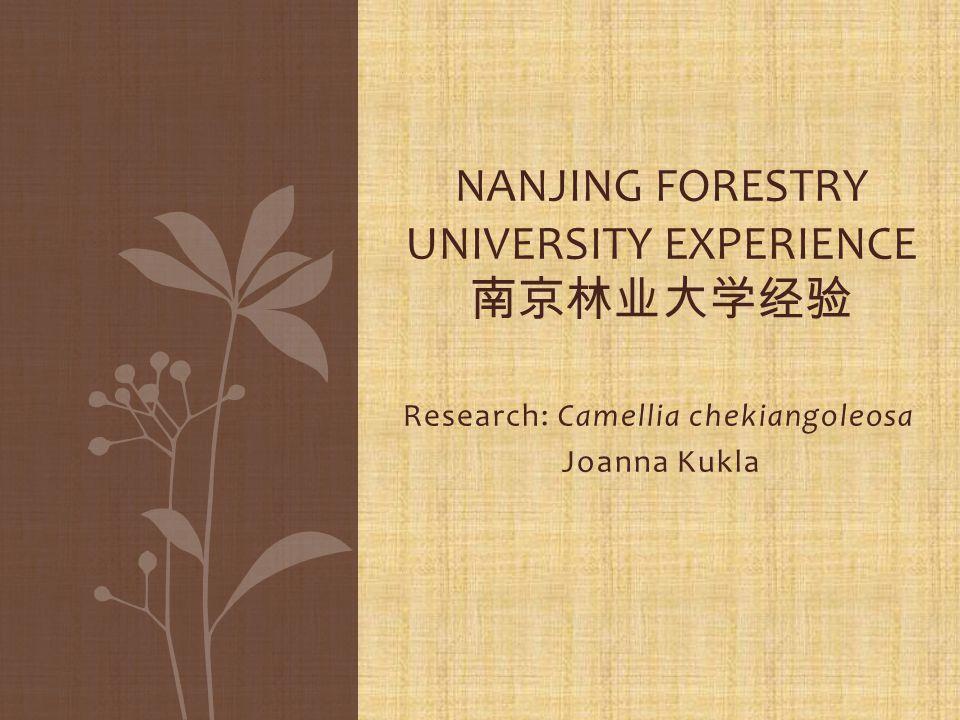 Research: Camellia chekiangoleosa Joanna Kukla NANJING FORESTRY UNIVERSITY EXPERIENCE