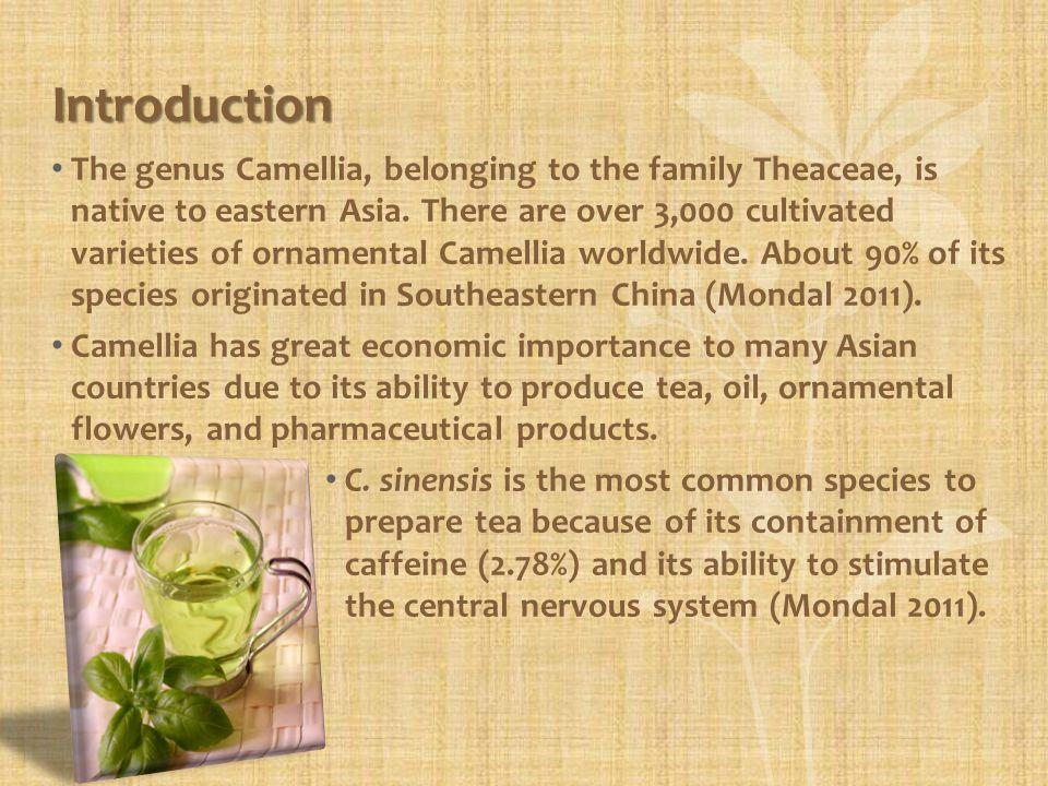 Camellia Oil Camellia chekiangoleosa Camellia chekiangoleosa, also known as cháhuā or flowering tea, is used to produce oil.