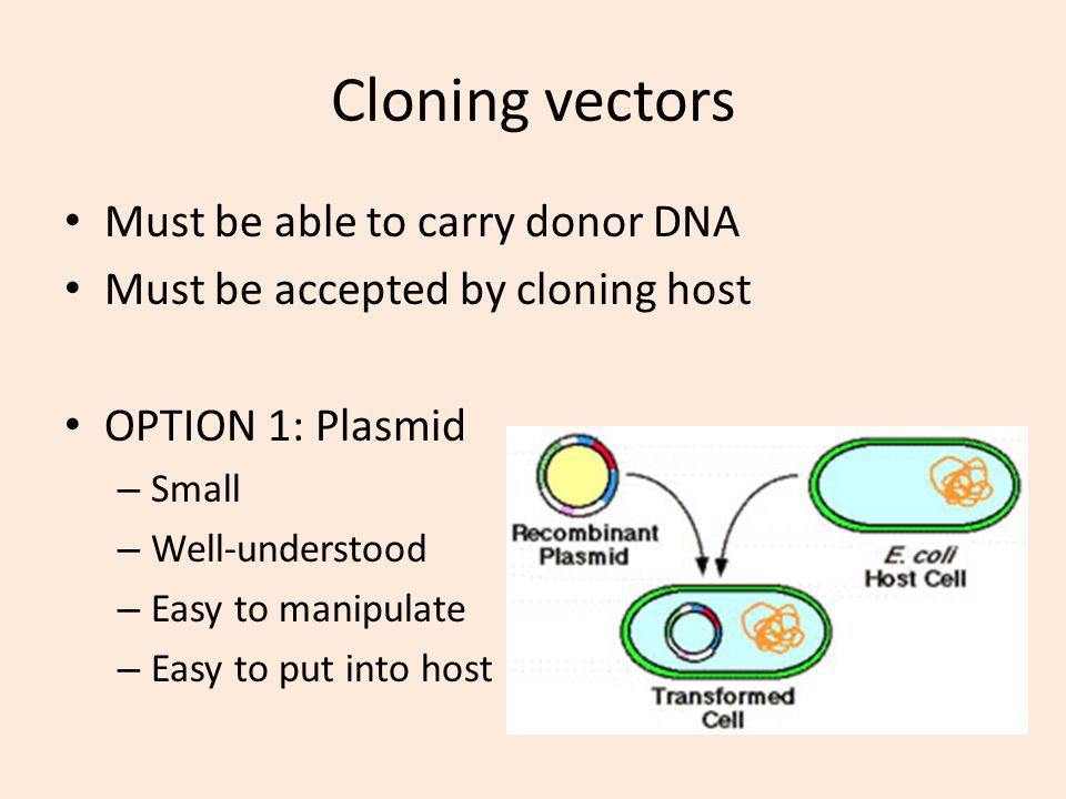 Cloning vectors Must be able to carry donor DNA Must be accepted by cloning host OPTION 1: Plasmid – Small – Well-understood – Easy to manipulate – Ea