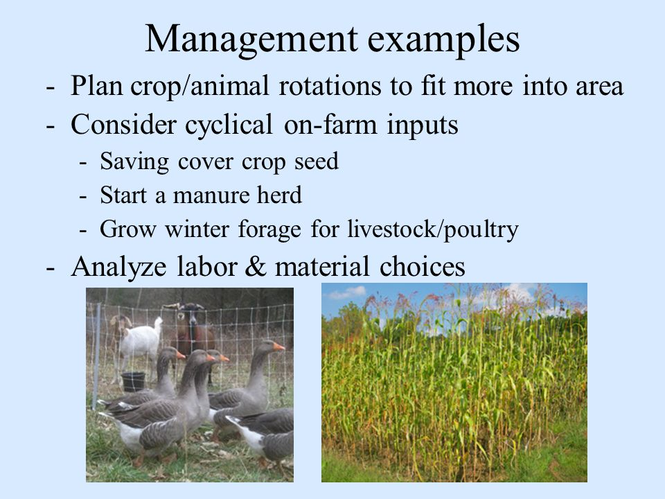 Management examples -Plan crop/animal rotations to fit more into area -Consider cyclical on-farm inputs -Saving cover crop seed -Start a manure herd -Grow winter forage for livestock/poultry -Analyze labor & material choices