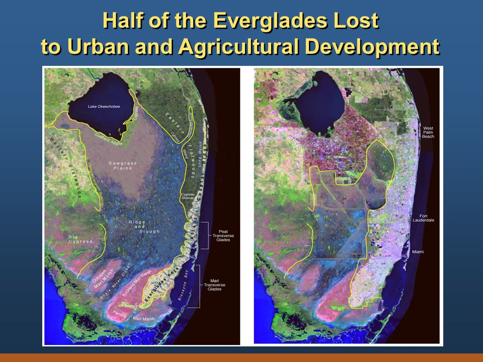 Half of the Everglades Lost to Urban and Agricultural Development