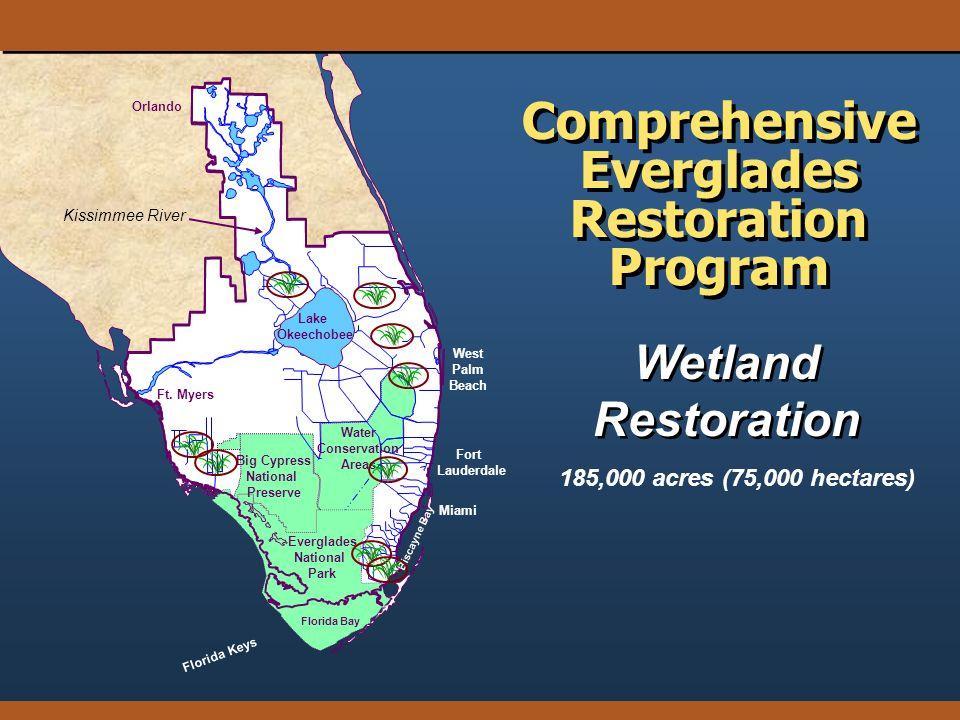 Wetland Restoration Wetland Restoration Orlando Florida Keys Florida Bay Big Cypress National Preserve Everglades National Park Lake Okeechobee Ft. My