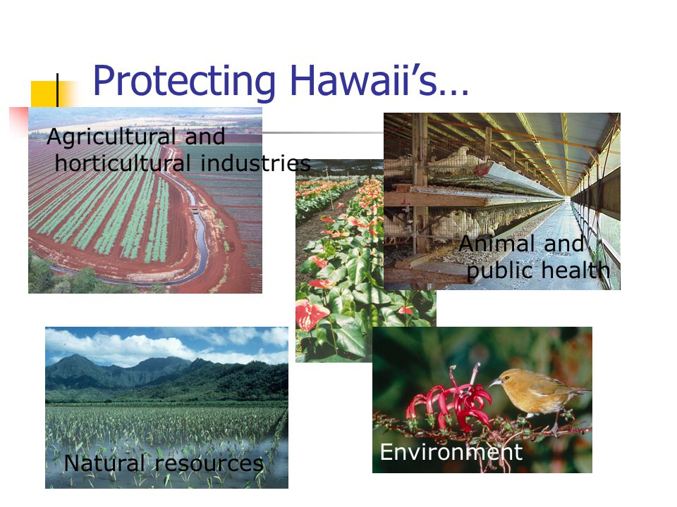Protecting Hawaiis… Agricultural and horticultural industries Animal and public health Natural resources Environment