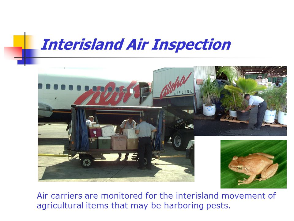 Interisland Air Inspection Air carriers are monitored for the interisland movement of agricultural items that may be harboring pests.