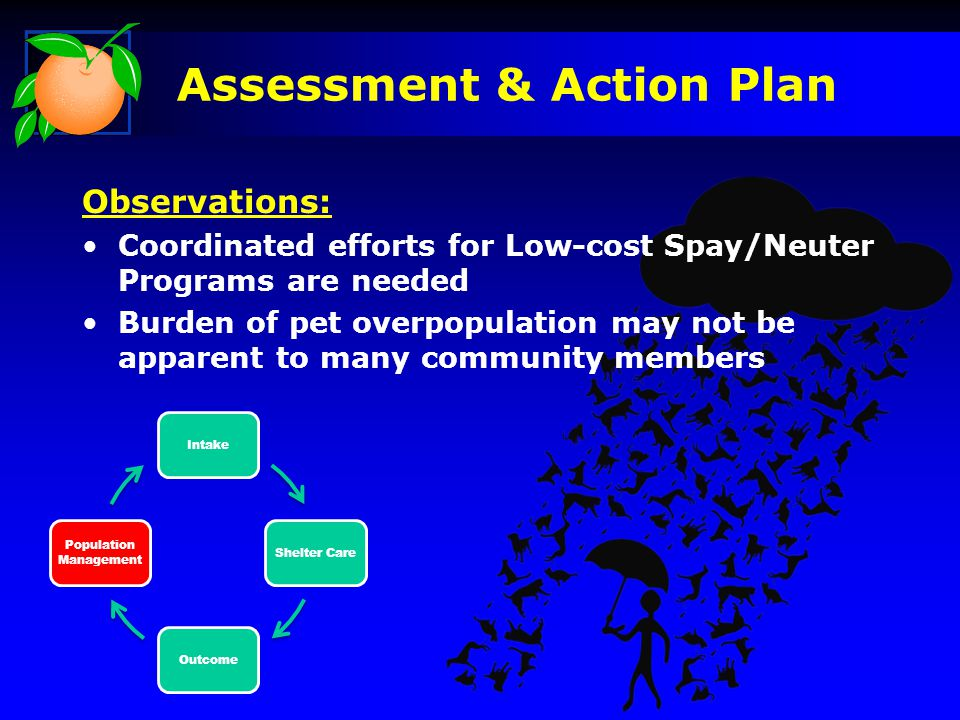 IntakeShelter CareOutcome Population Management Observations: Coordinated efforts for Low-cost Spay/Neuter Programs are needed Burden of pet overpopul