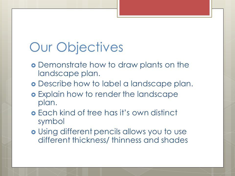 How are plants drawn on the landscape plan.