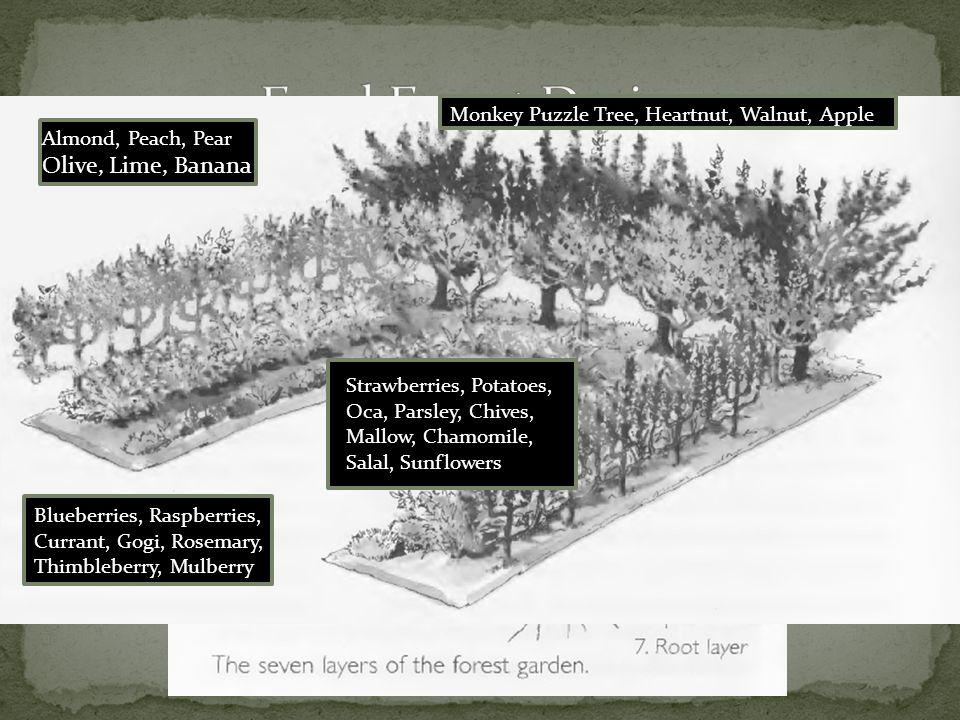 Adds Organic Matter Fixes Nitrogen Encourages Soil Biodiversity