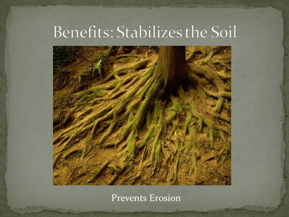 Prevents Erosion