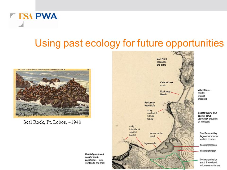 Seal Rock, Pt. Lobos, ~1940 Using past ecology for future opportunities