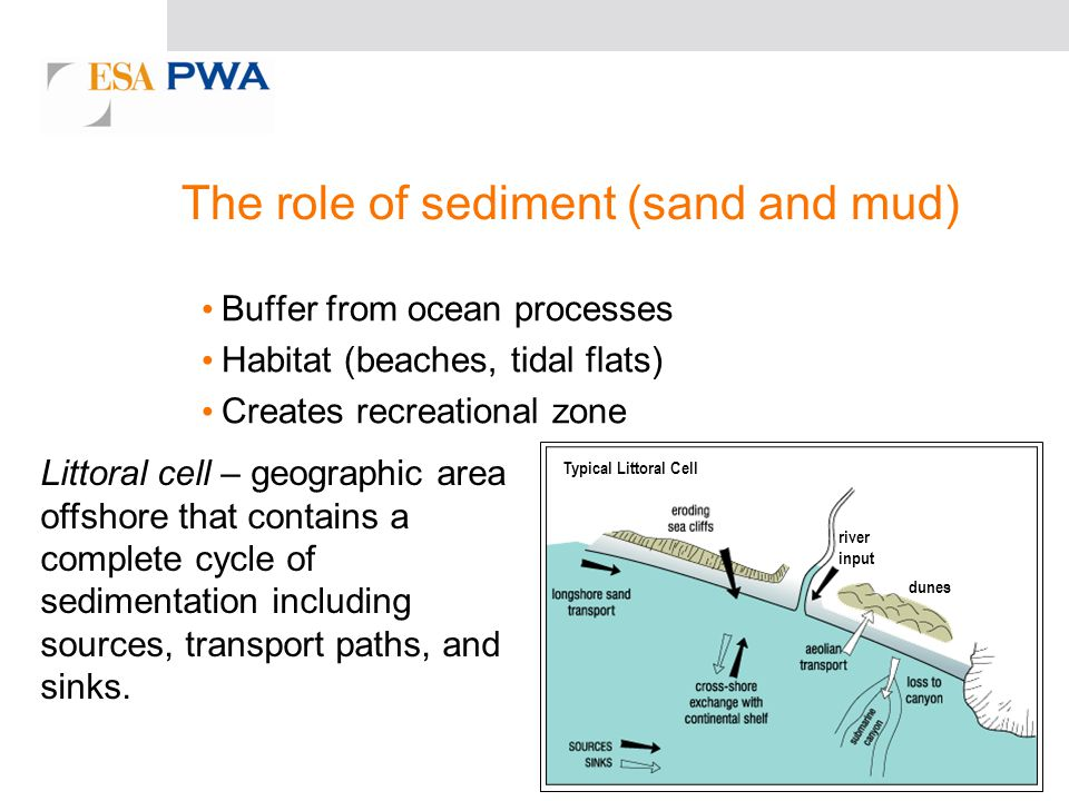 The role of sediment (sand and mud) Buffer from ocean processes Habitat (beaches, tidal flats) Creates recreational zone Littoral cell – geographic area offshore that contains a complete cycle of sedimentation including sources, transport paths, and sinks.