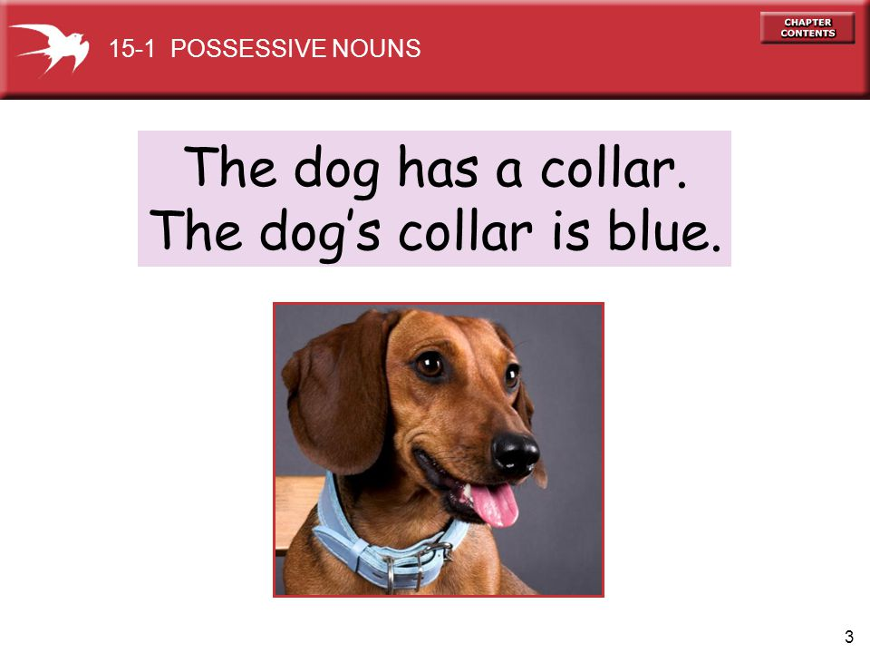 3 The dog has a collar. The dogs collar is blue. 15-1 POSSESSIVE NOUNS