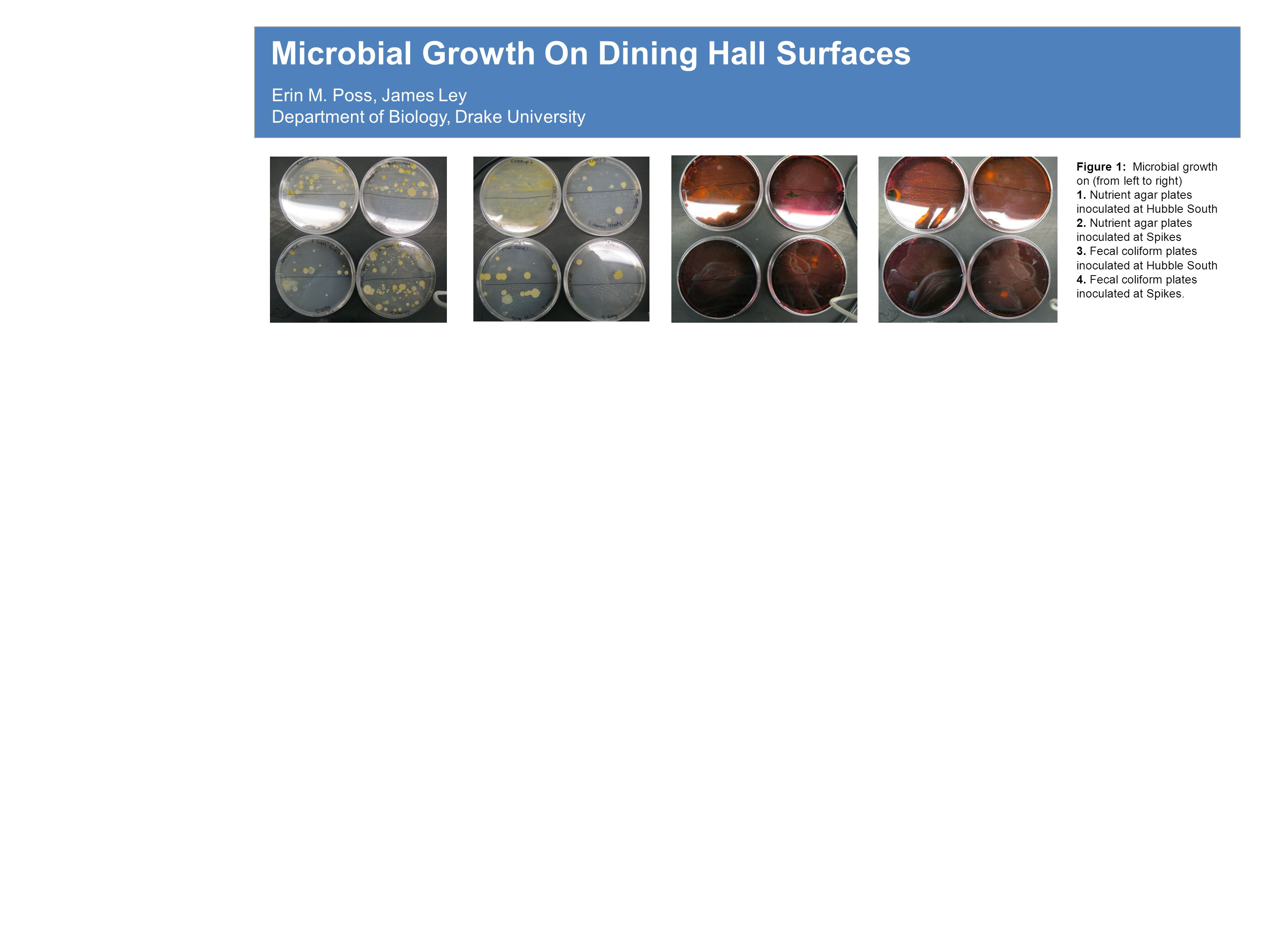 Microbial Growth On Dining Hall Surfaces Erin M.