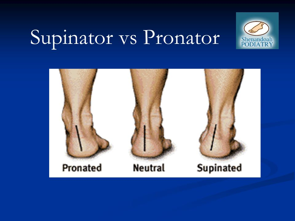 Supinator vs Pronator