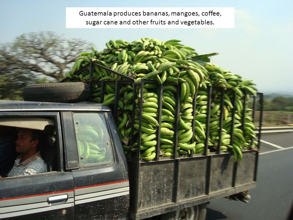 Guatemala produces bananas, mangoes, coffee, sugar cane and other fruits and vegetables.