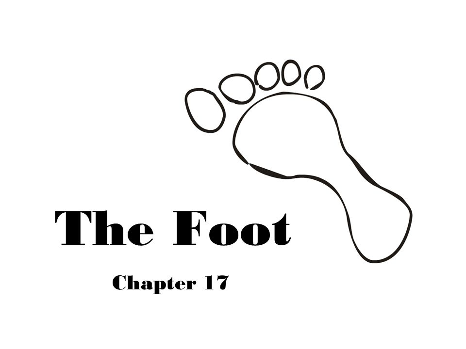 The Foot Chapter 17