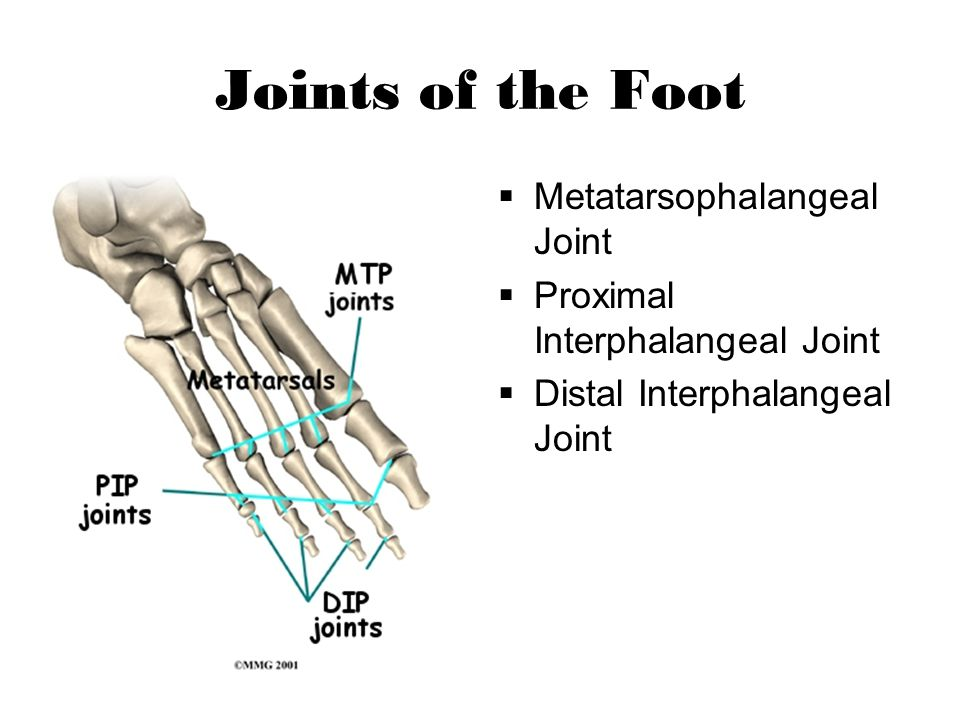 Joints of the Foot Metatarsophalangeal Joint Proximal Interphalangeal Joint Distal Interphalangeal Joint