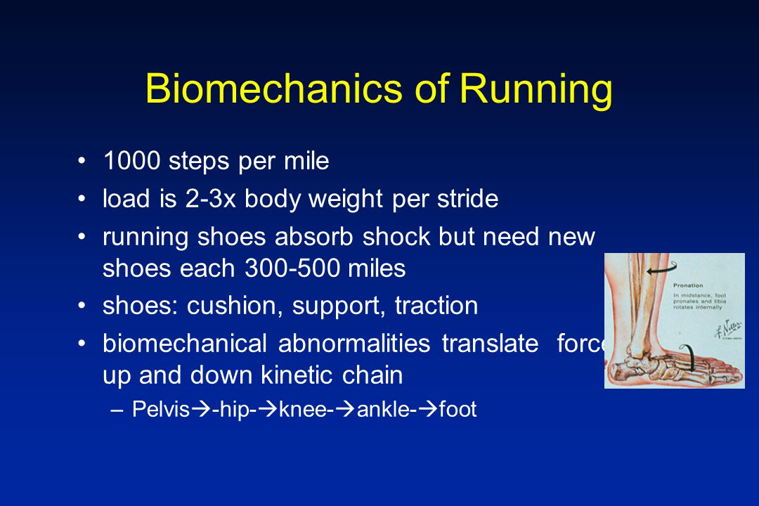 Biomechanics of Running 1000 steps per mile load is 2-3x body weight per stride running shoes absorb shock but need new shoes each 300-500 miles shoes