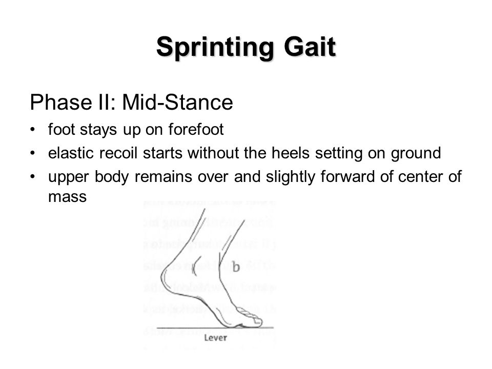 Sprinting Gait Phase II: Mid-Stance foot stays up on forefoot elastic recoil starts without the heels setting on ground upper body remains over and slightly forward of center of mass