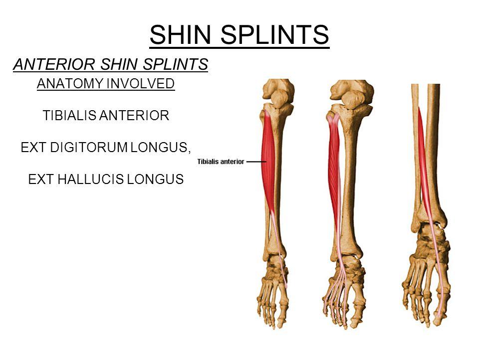 SHIN SPLINTS POSTERIOR SHIN SPLINTS ANATOMY INVOLVED TIBIALIS POSTERIOR