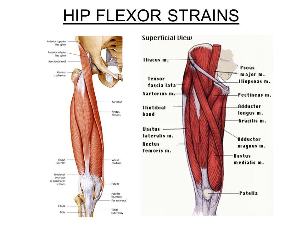 Hip groin pain when sleeping dogs, exercises for tight hip flexor ...