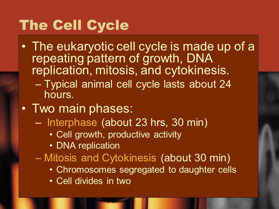 The Cell Cycle The eukaryotic cell cycle is made up of a repeating pattern of growth, DNA replication, mitosis, and cytokinesis. –Typical animal cell