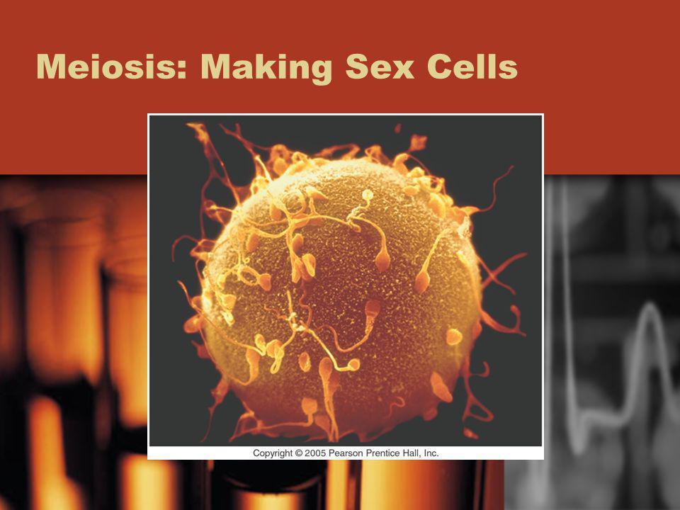 Meiosis: Making Sex Cells