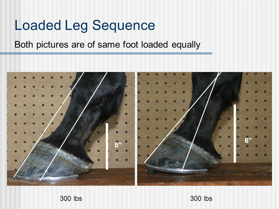 Loaded Leg Sequence Both pictures are of same foot loaded equally 300 lbs 5 6