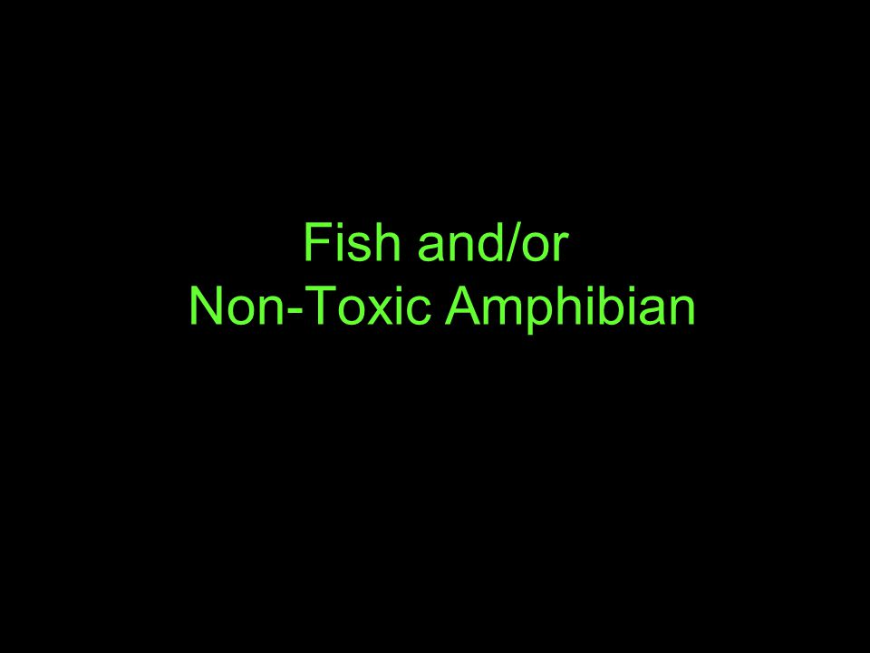 Fish and/or Non-Toxic Amphibian