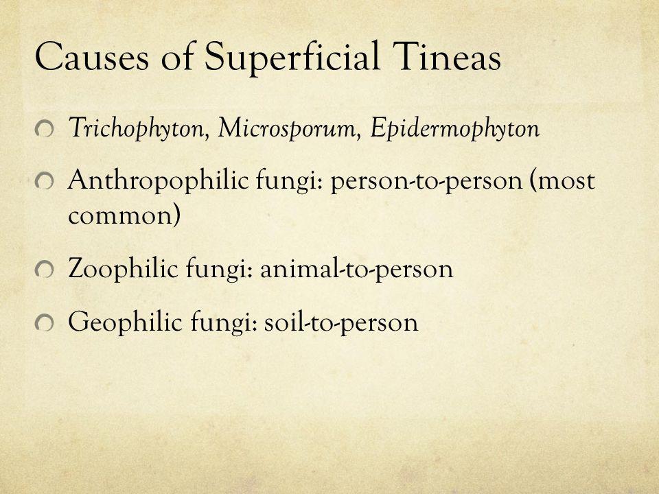 Causes of Superficial Tineas Trichophyton, Microsporum, Epidermophyton Anthropophilic fungi: person-to-person (most common) Zoophilic fungi: animal-to
