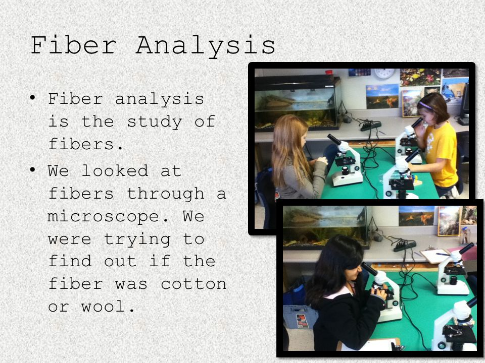 Fiber Analysis Fiber analysis is the study of fibers. We looked at fibers through a microscope. We were trying to find out if the fiber was cotton or