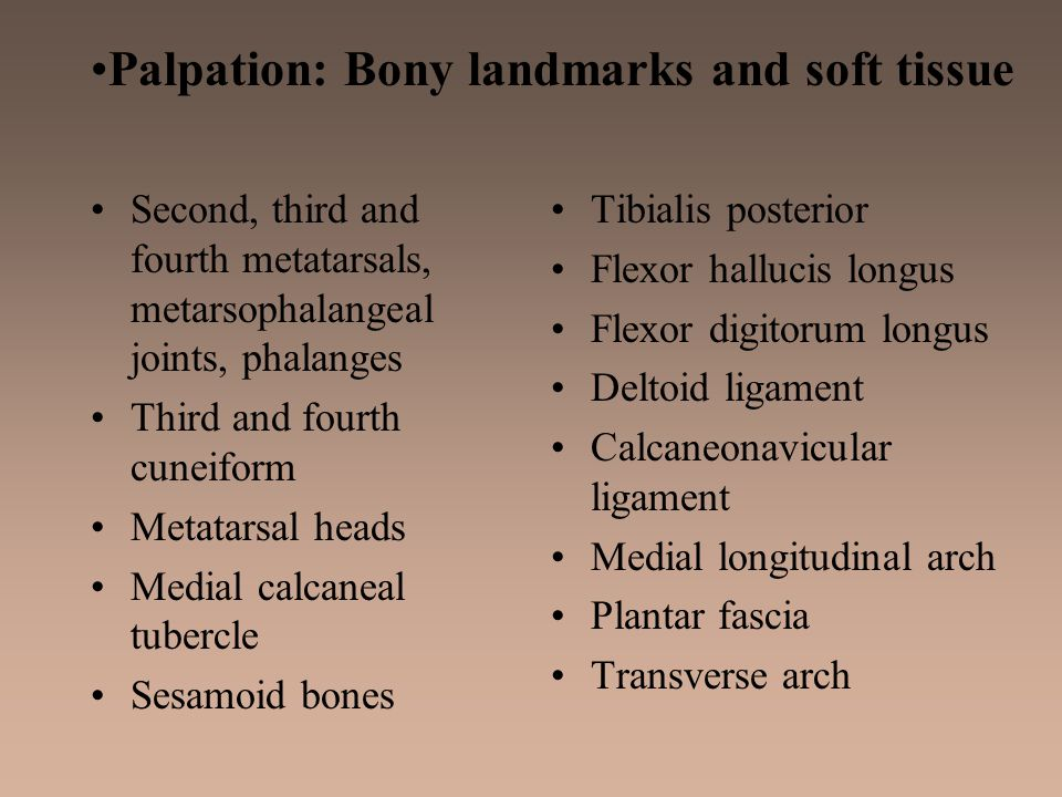 Palpation: Bony landmarks and soft tissue Second, third and fourth metatarsals, metarsophalangeal joints, phalanges Third and fourth cuneiform Metatar