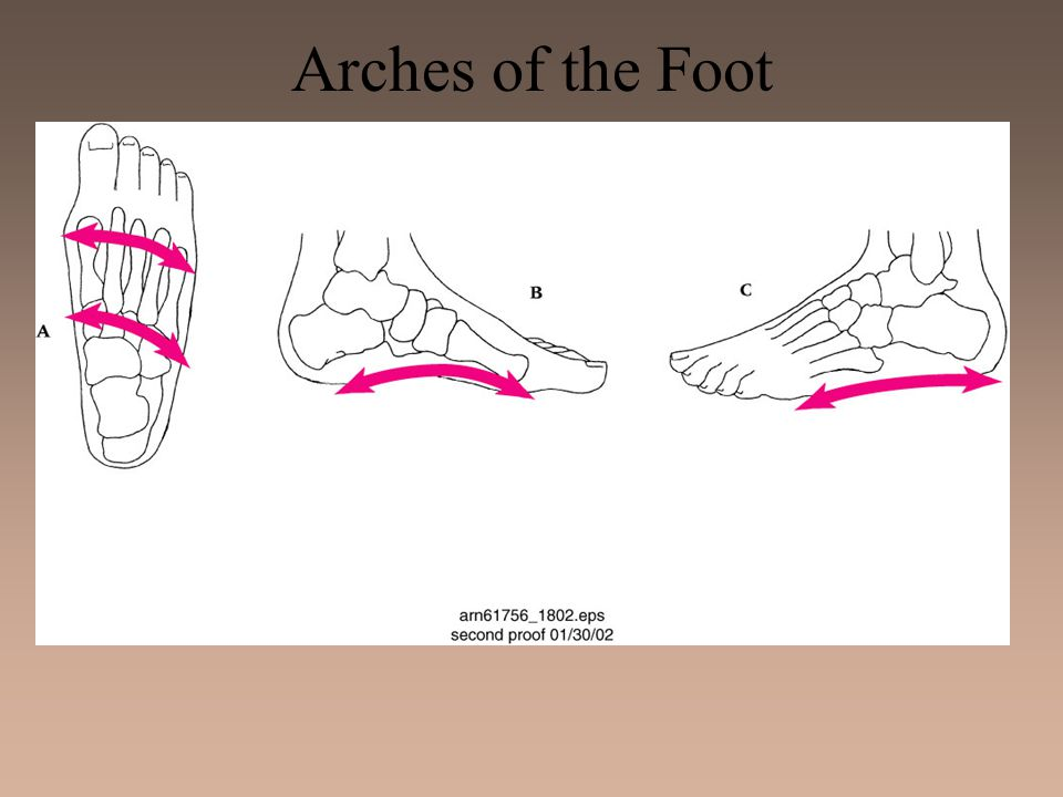 Metatarsal Stress Fractures –Etiology 2nd metatarsal fracture (March fracture) Change in running pattern, mileage, hills, or hard surfaces Forefoot varus, hallux valgus, flatfoot or short 1st metatarsal Occasional 5th metatarsal fracture at base and insertion of peroneus brevis –Management Bone scan may be necessary 3-4 days of partial weight bearing followed by 2 weeks rest Return to running should be gradual and orthotics should be used to correct excessive pronation