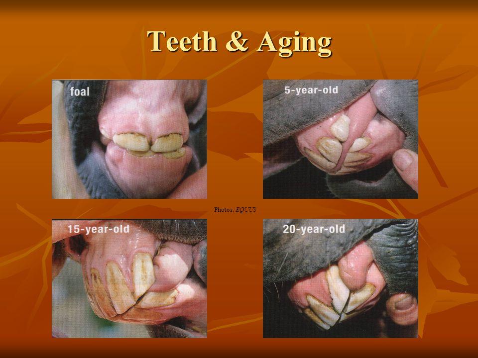 Teeth & Aging Photos: EQUUS