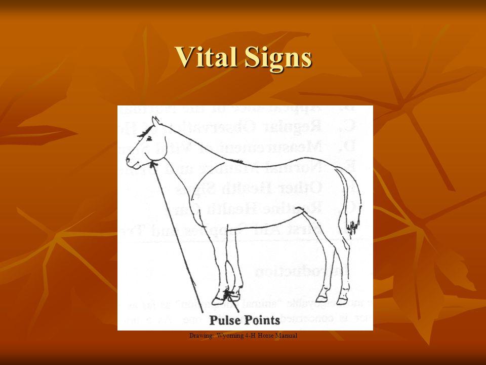 Vital Signs Drawing: Wyoming 4-H Horse Manual