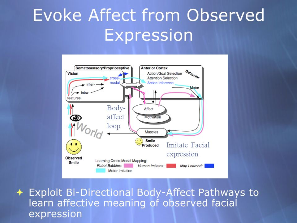 Evoke Affect from Observed Expression Exploit Bi-Directional Body-Affect Pathways to learn affective meaning of observed facial expression Body- affect loop Imitate Facial expression