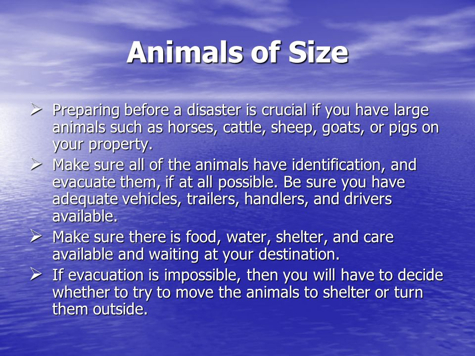 Animals of Size Preparing before a disaster is crucial if you have large animals such as horses, cattle, sheep, goats, or pigs on your property.