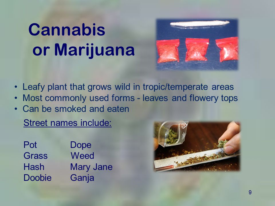 9 Cannabis or Marijuana Leafy plant that grows wild in tropic/temperate areas Most commonly used forms - leaves and flowery tops Can be smoked and eaten Street names include: Pot Dope Grass Weed Hash Mary Jane Doobie Ganja