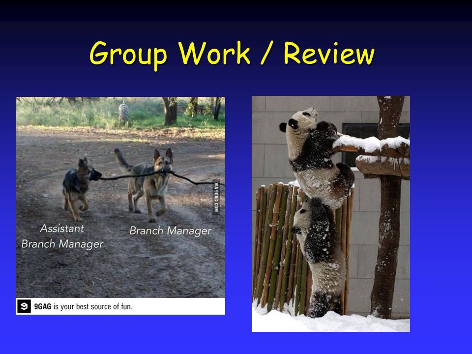 Group Work / Review