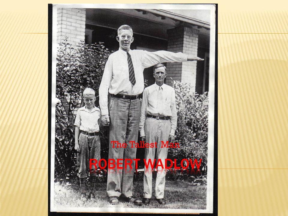 The Tallest Man