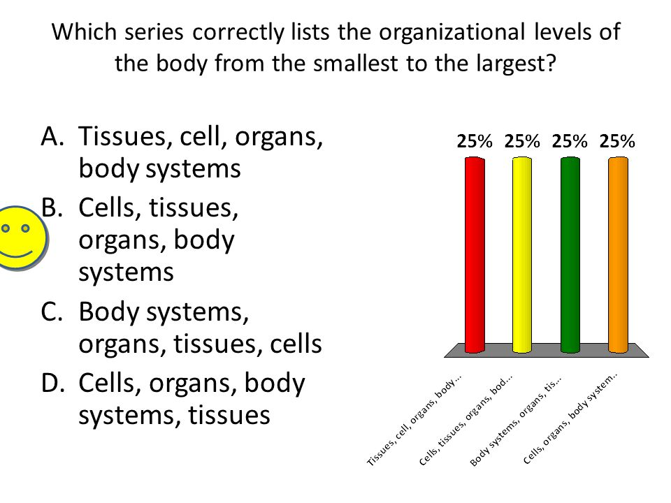 Which series correctly lists the organizational levels of the body from the smallest to the largest? A.Tissues, cell, organs, body systems B.Cells, ti