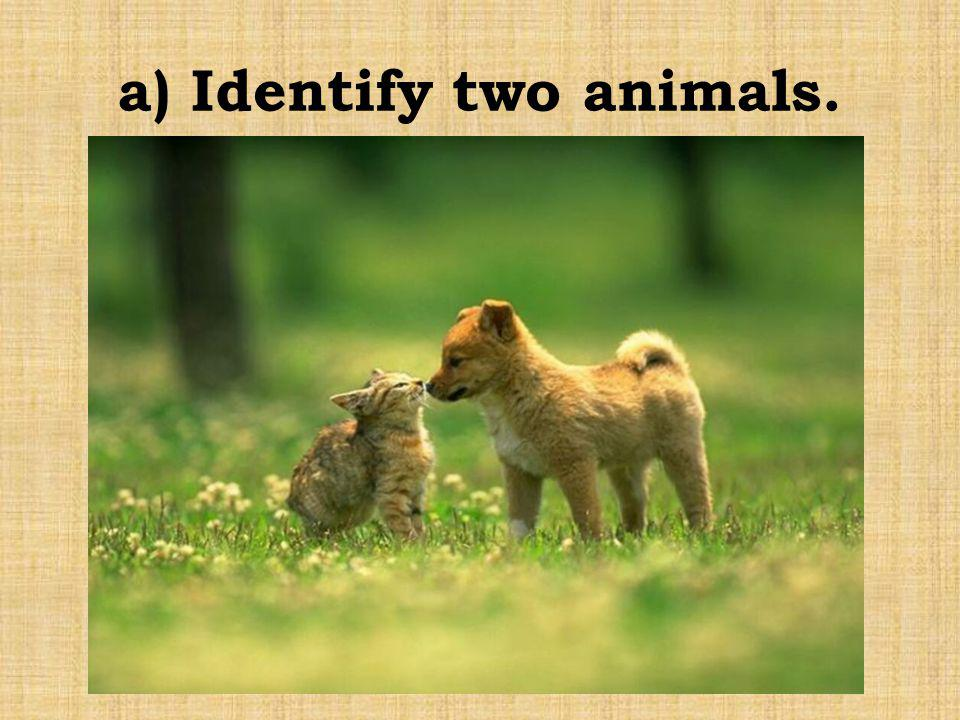 a) Identify two animals.