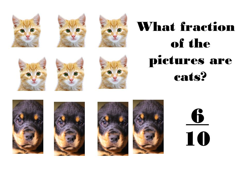 What fraction of the pictures are cats?