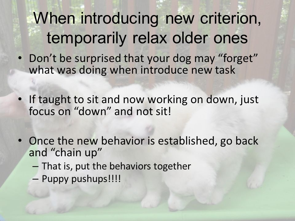 When introducing new criterion, temporarily relax older ones Dont be surprised that your dog may forget what was doing when introduce new task If taught to sit and now working on down, just focus on down and not sit.