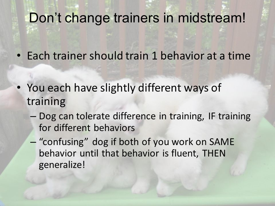 Dont change trainers in midstream.
