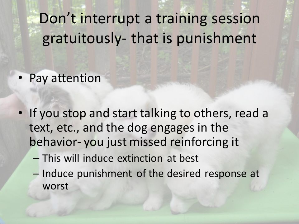Dont interrupt a training session gratuitously- that is punishment Pay attention If you stop and start talking to others, read a text, etc., and the dog engages in the behavior- you just missed reinforcing it – This will induce extinction at best – Induce punishment of the desired response at worst